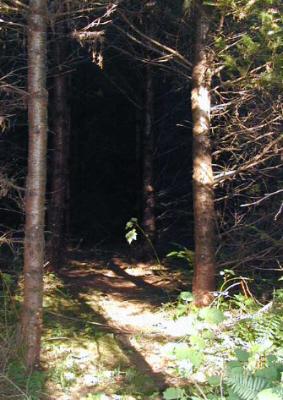 wood-path.jpg