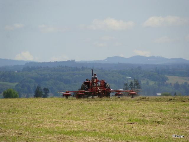 Long days of raking hay